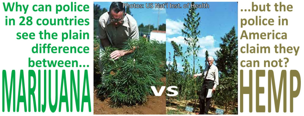Marijuana-vs.-Hemp